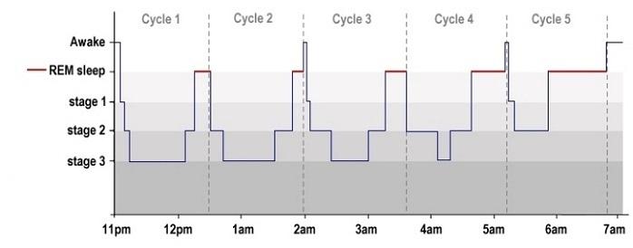 ciclos_sueno